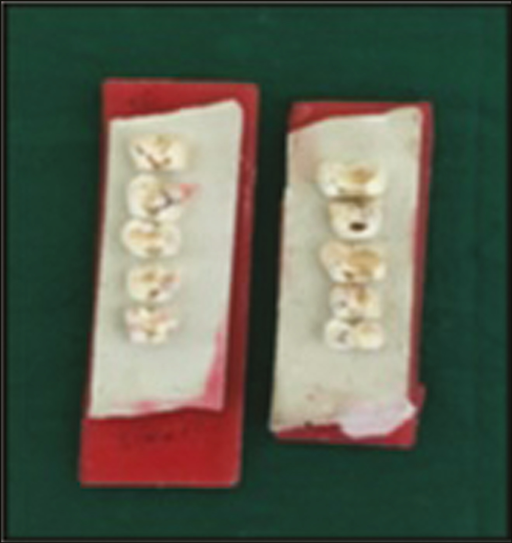 Figure 2: Sectioned samples mounted on a wax block